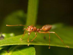 Karıncadan küçük ama 8 milyon kişiyi hasta ediyor