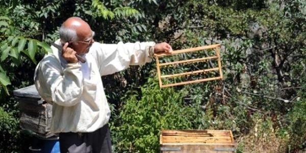 Kilosu 5 bin liraya arı sütüne yoğun talep