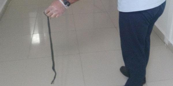 Hastanede 'yılan' operasyonu