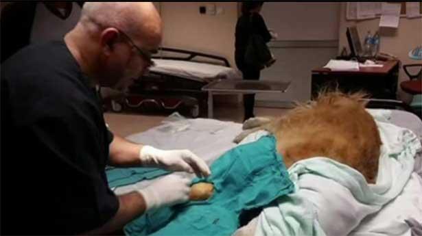 Devlet hastanesinde köpeğe ameliyat yapan ortopediste soruşturma