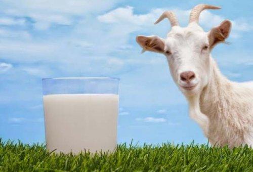 Anne sütüne en yakın gıda tehlikede