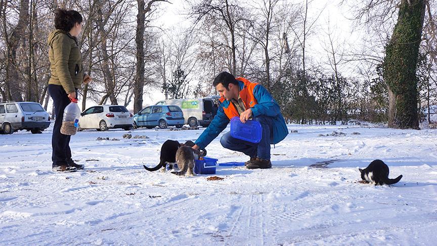 Doktor çift hayatını sokak hayvanlarına adadı
