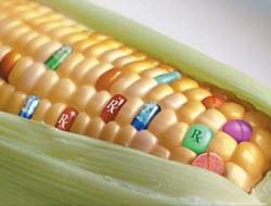 GDO'lu gıdalar kısırlığa sebep oluyor
