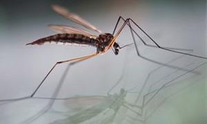 Sivrisinek ısırığını sakın kaşımayın