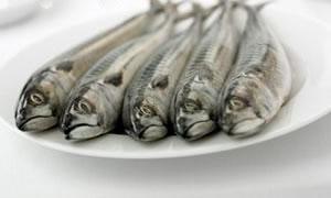 Taze balığın sırları
