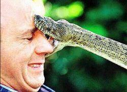 Yaz aylarında yılan sokmalarına karşı dikkat