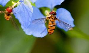 Arı sokması bu rahatsızlığa iyi geliyor