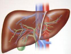Japonların son buluşu: Karaciğer