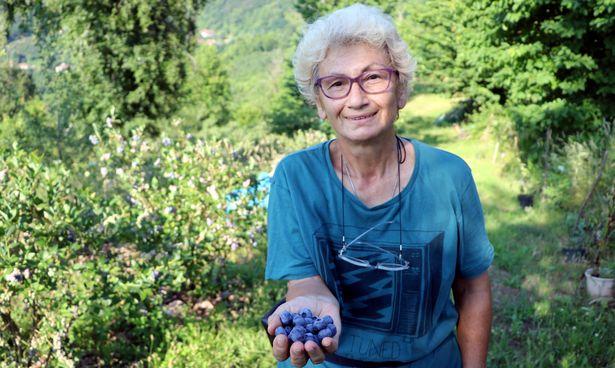 Mavi yemiş yetiştiren emekli doktor siparişlere yetişemiyor