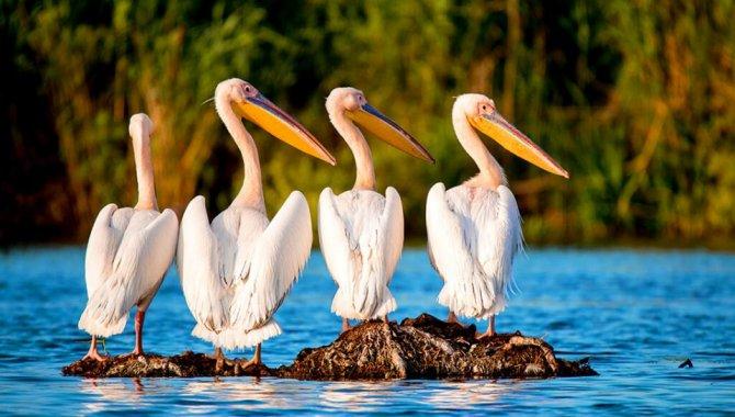 Akkaya Barajı gölündeki 224 kuş türüne nefes aldıracak arıtma tesisinde sona gelindi