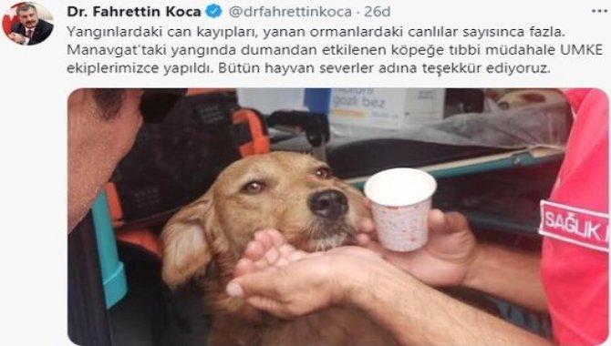 UMKE, Manavgat'ta dumandan etkilenen köpeğe tıbbi müdahalede bulundu