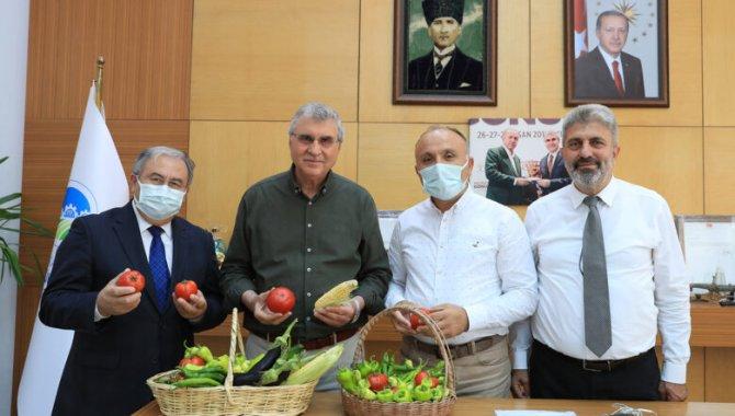 Sakarya Büyükşehir Belediyesinin yetiştirdiği ata tohumları ilk mahsullerini verdi