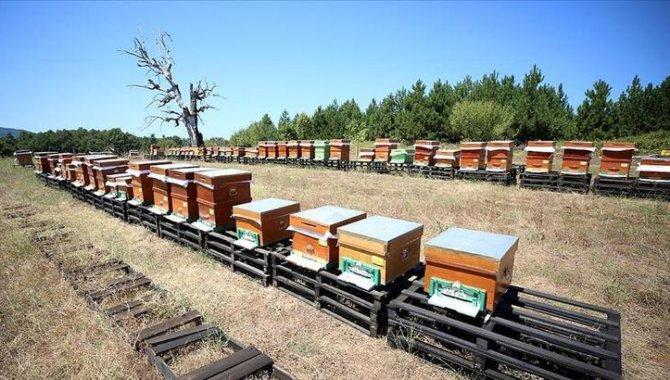 Kazdağları'nın rüzgarında uçan arıların balları 5 ülkeye ihraç ediliyor