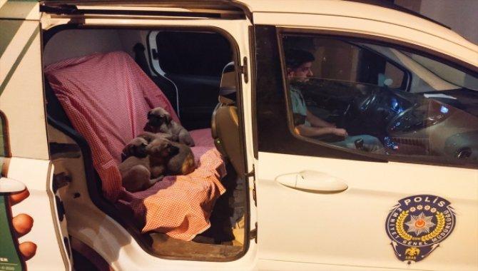 Tunceli'de torbaya konularak ölüme terk edilen köpekler kurtarıldı