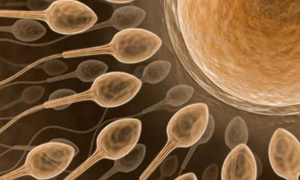 Spermi olmayan erkeklere müjde!