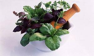 7 hastalığa deva olan 7 şifalı bitki