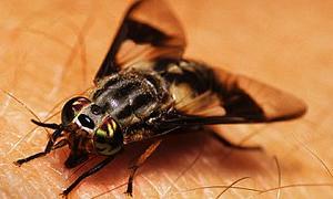 Böcek ısırığına karşı önlemler