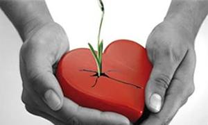 Organ nakli hakkında 10 soru