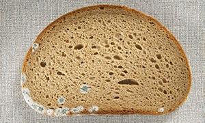 Bayat ve küflü ekmek karaciğeri kanser ediyor