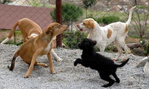 Köpeklerle oynayan bebekler daha az hasta oluyor