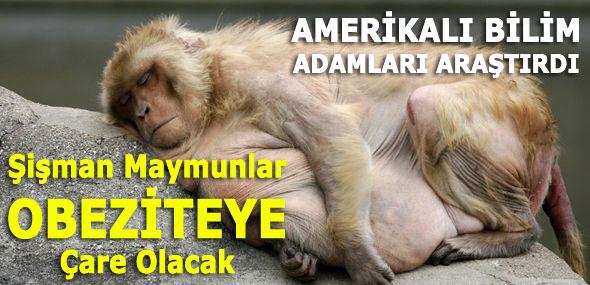 Obeziteye Çare: Şişman Maymunlar
