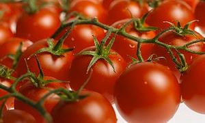 Kansere karşı günde beş domates
