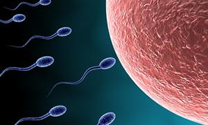 Dünyanın kürtaj raporundan notlar...