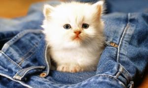 Kedisi olanlar dikkat!