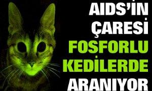 Fosforlu kediler AIDS araştırmalarına ışık tutuyor