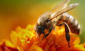 HIV'e karşı arı zehiri