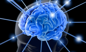 Beyindeki kök hücreler, tümöre karşı koruyor