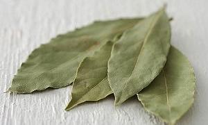 Defne yaprağının yararları nelerdir?