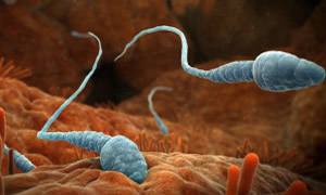 Yüzen sperme milyonluk destek