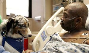 Evcil hayvanların tıbbi tedavide kullanılması sorgulanıyor / Video