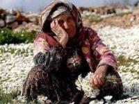 514 köyde kanser alarmı