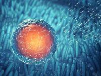 İnsan embriyosunun genetiği değiştirildi