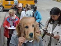 Sokak hayvanları için rehabilitasyon merkezi açılması isteği