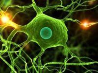 Nobel Tıp Ödülü'ne de konu olan 'otofaji' ile tedavi önerisi