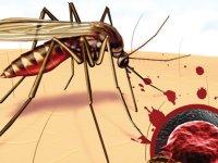 Nijerya'da Lassa sıtmasından 16 kişi yaşamını yitirdi
