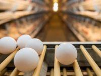 Zehirli yumurta krizi kıta kıta geziyor sıra Asya'da