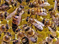 Arı saldırısına uğrayan kişi hayatını kaybetti