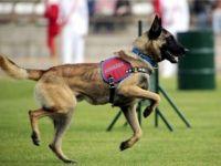 Engelli çocuklara jandarma köpekleriyle terapi