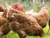 'Her organik denilen ürün, organik değil'