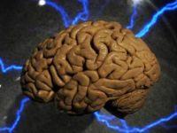 Maymun beynine doğrudan bilgi enjekte edildi