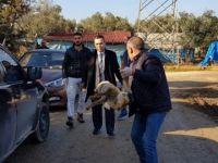Kuyruğu kesilmiş yavru tilki, tel örgülere asılı bulundu