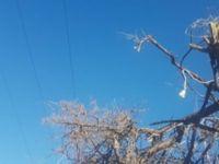 İmam ağaç budarken akıma kapılıp öldü