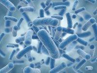 Bağışıklık sistemimizi ayakta tutan askerler: anti-oksidanlar