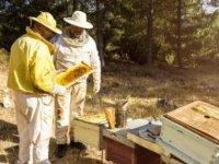 Hastalıkların şifasını arı iğnesinde buluyorlar