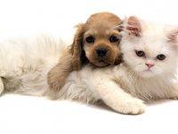 Kedi ve Köpeklerden İnsanlara Bulaşan Hastalıklar