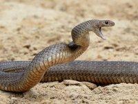 'Ölümcül virüs, yılanlardan insanlara geçmiş'